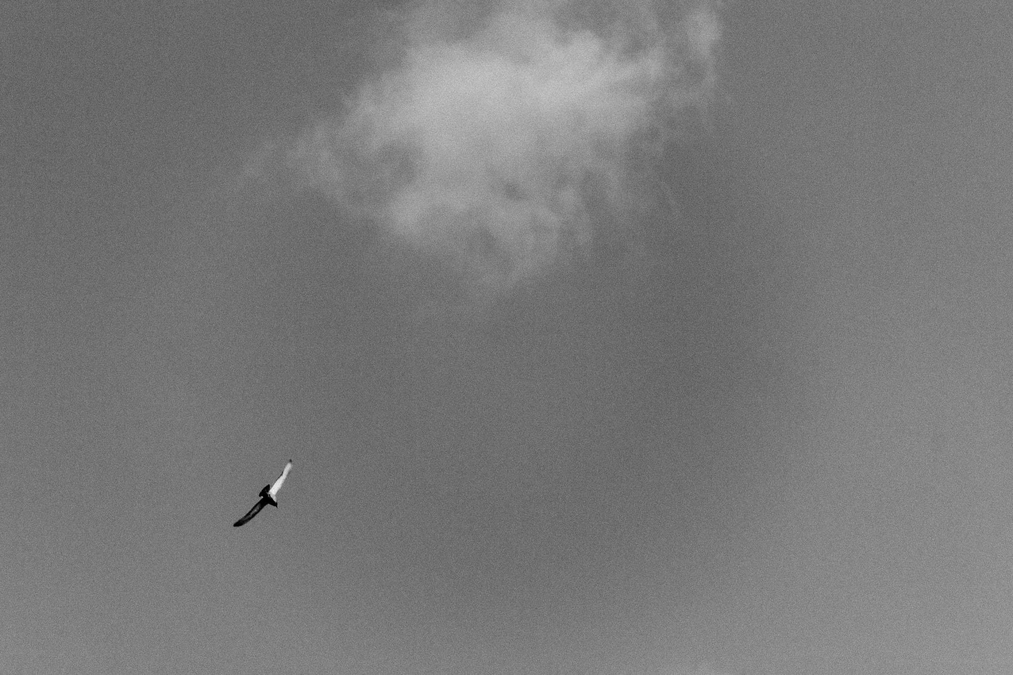 Gull, Cloud